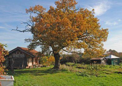 Vakantiehuis Blokhut naast de eik